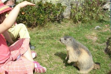 Les marmottes nous invitent à l'apéro